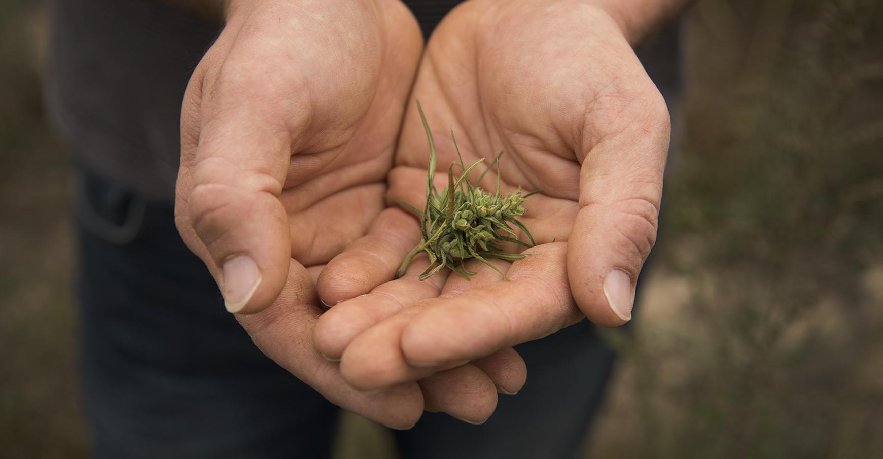La Creuse rêve du cannabis thérapeutique pour relancer son économie