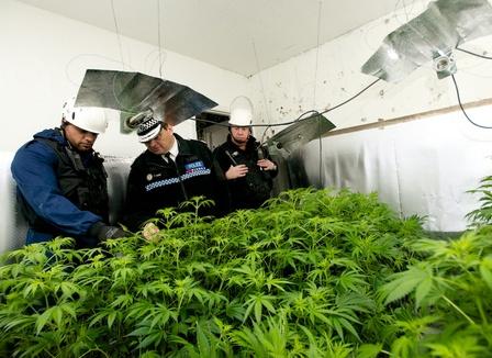 Le Cannabis Social Club perquisitionné : «La police s'est trompée d'ordinateur»