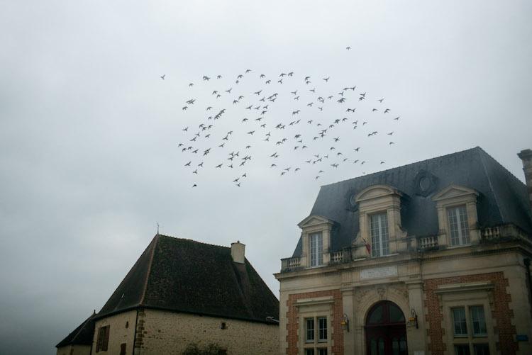 andra 12 oiseaux